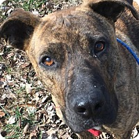 Adopt A Pet :: Lexi - Pottstown, PA