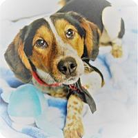 Adopt A Pet :: Elroy - Waupaca, WI
