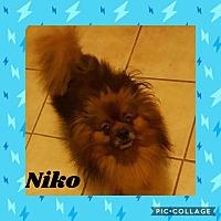 Adopt A Pet :: Niko - Alpharetta, GA