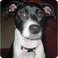 Adopt A Pet :: SweetPea - Gilbert, AZ