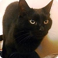 Adopt A Pet :: Damon - Nolensville, TN