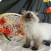 Adopt A Pet :: Berrymore - Clearfield, UT