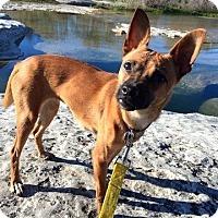 Adopt A Pet :: Chia - Austin, TX