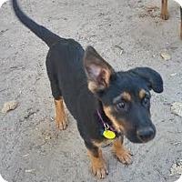 Adopt A Pet :: Maddy - Denver, CO