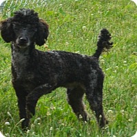 Adopt A Pet :: Eddie - Prole, IA