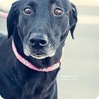 Adopt A Pet :: Charity - Gainesville, FL