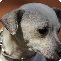 Adopt A Pet :: Ember - tampa, FL