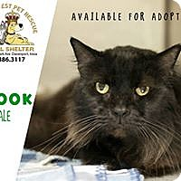 Domestic Longhair Cat for adoption in Davenport, Iowa - Spook