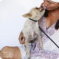 Adopt A Pet :: Norman - Castaic, CA