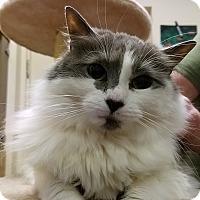 Adopt A Pet :: Lula - Trevose, PA