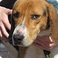 Adopt A Pet :: Parker - Windsor, VA