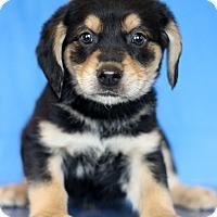 Adopt A Pet :: Missouri - Waldorf, MD