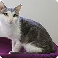 Adopt A Pet :: Powzer - Greensboro, NC