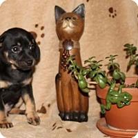Adopt A Pet :: Lumiere - Salem, NH
