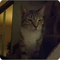 Adopt A Pet :: Dewey - Lombard, IL
