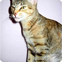 Adopt A Pet :: Tootsie - Medway, MA