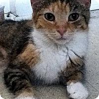 Adopt A Pet :: Pumbaa - Alexandria, VA