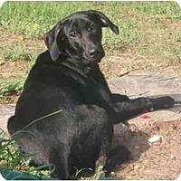 Adopt A Pet :: Reagan - Arlington, TX