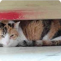 Adopt A Pet :: Bonnie - El Cajon, CA