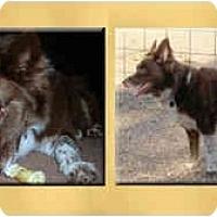 Adopt A Pet :: Danni - Scottsdale, AZ