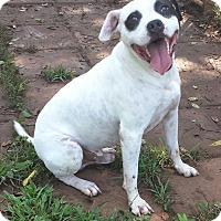 Adopt A Pet :: Rocket - Spring Valley, NY