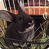 Adopt A Pet :: Sprinkles - Moneta, VA