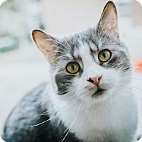 Adopt A Pet :: Zeus - Verdun, QC