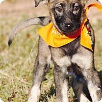 Adopt A Pet :: Willow-pending adoption - Manchester, CT