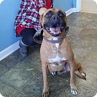 Adopt A Pet :: Joe - Boston, MA