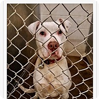 Adopt A Pet :: Brutus - ADOPTED! - Zanesville, OH