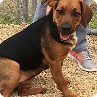 Adopt A Pet :: Isabell 💜 DOB 6/07/16! - Allentown, PA