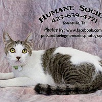 Adopt A Pet :: Thomas - Greeneville, TN