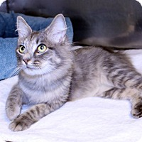 Adopt A Pet :: Felicia - Lumberton, NC