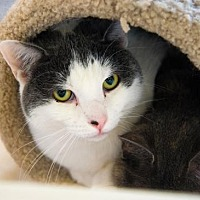 Adopt A Pet :: Carl - Palm Springs, CA
