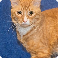 Adopt A Pet :: Rudy - Elmwood Park, NJ