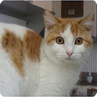 Adopt A Pet :: Goldie - Winter Haven, FL