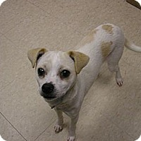 Adopt A Pet :: Pancho - Ludington, MI