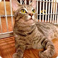 Adopt A Pet :: Milly - Bentonville, AR