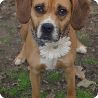Adopt A Pet :: Sunny ~ Adoption Pending - Youngstown, OH
