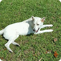 Adopt A Pet :: Ghost (Guest) - Roswell, GA
