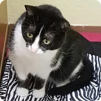Adopt A Pet :: Felicia *Perpetual Student - La Crescent, MN