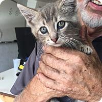Adopt A Pet :: Danielle - Stafford, VA