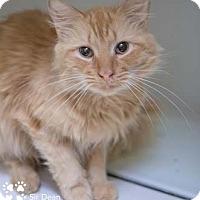 Adopt A Pet :: Sir Dean - Merrifield, VA