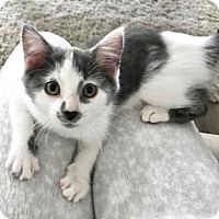 Adopt A Pet :: Layla - Hamilton, ON