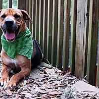 Adopt A Pet :: April - Odessa, FL