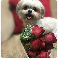 Adopt A Pet :: Louie - Pascagoula, MS
