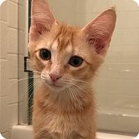 Adopt A Pet :: Roni TG - Schertz, TX