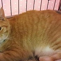 Adopt A Pet :: Buster - Fullerton, CA