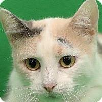 Adopt A Pet :: Mimosa    URGENT - St. Charles, MO