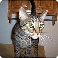 Adopt A Pet :: Jerry - Hesperia, CA